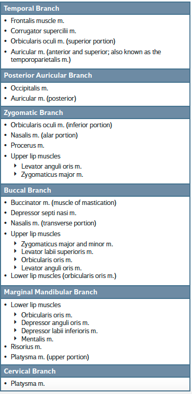 CRANIAL NERVE VII BRANCHES AND MUSCLES SUPPLIED