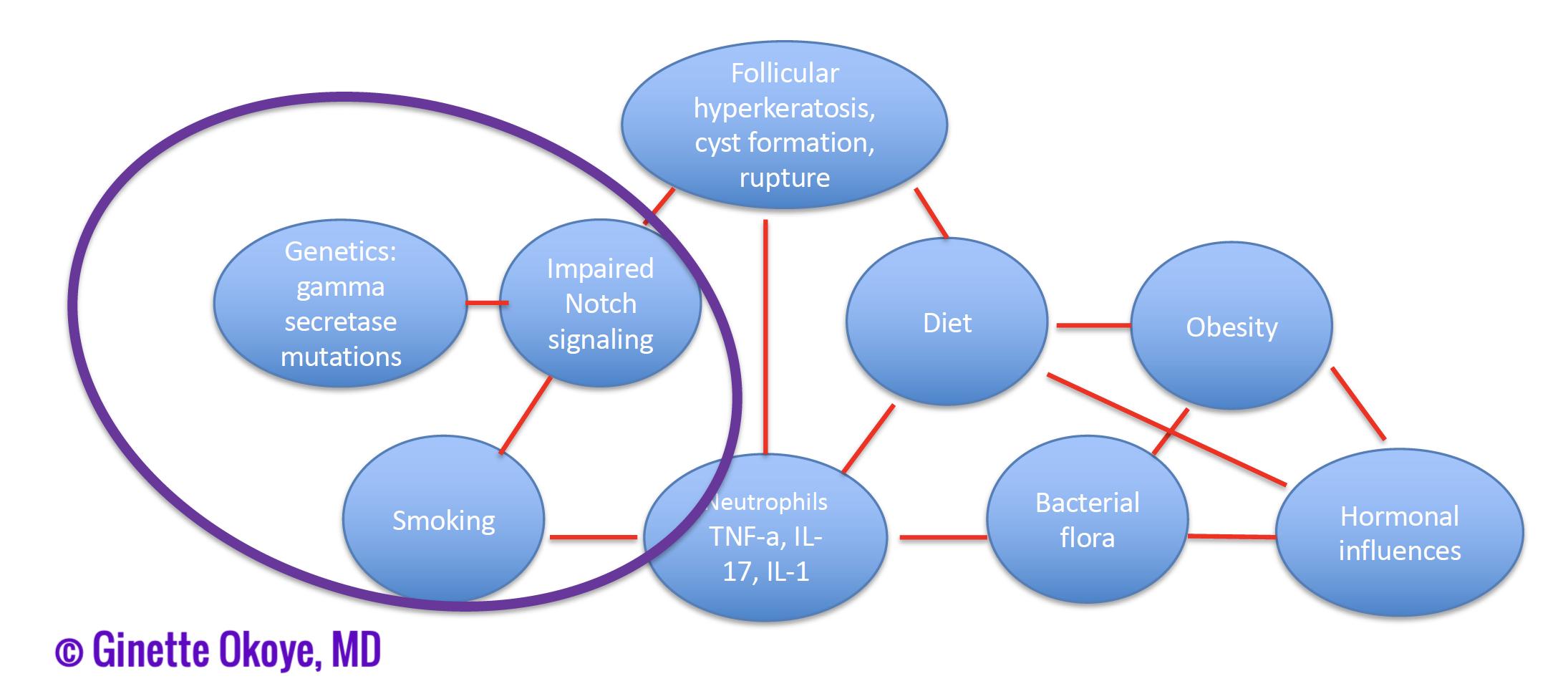 Pathogenesis of follicular subtype of HS